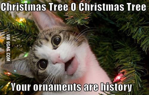 My cat every Christmas...