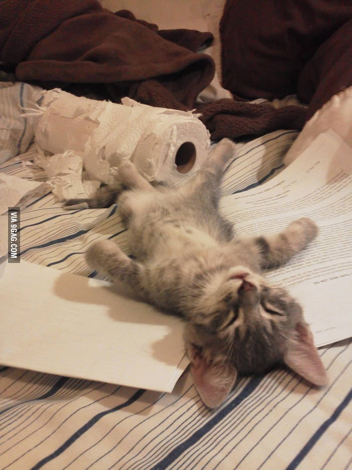 He falls asleep after some workout with the toilet paper.