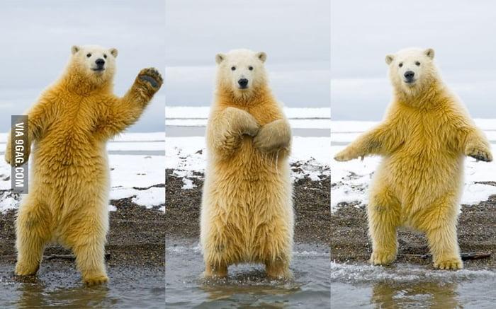 The Dancing Polar Bear