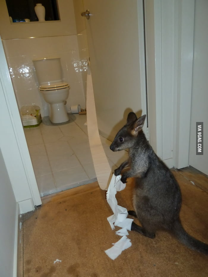 You saw cat/dog messes with toilet paper, how about kangaroo