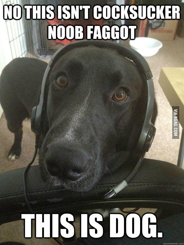 Dog plays Halo