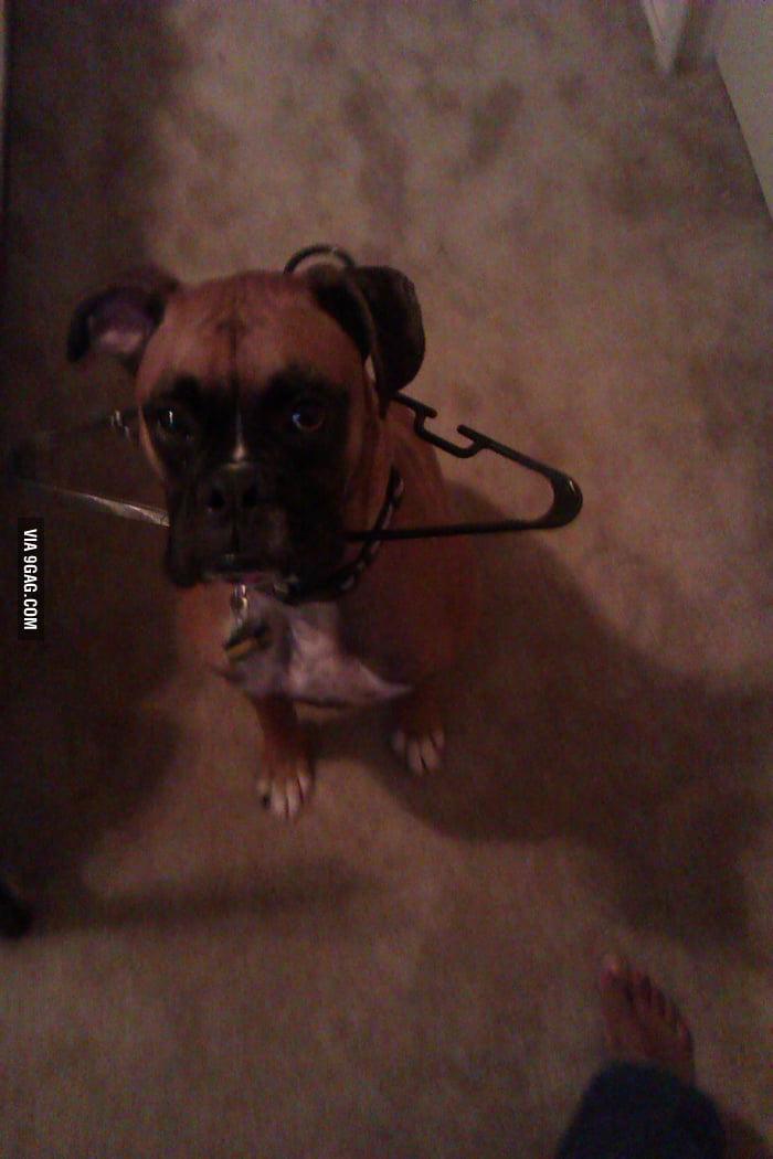 Dog: I did nothing. I woke up and it's around my neck.