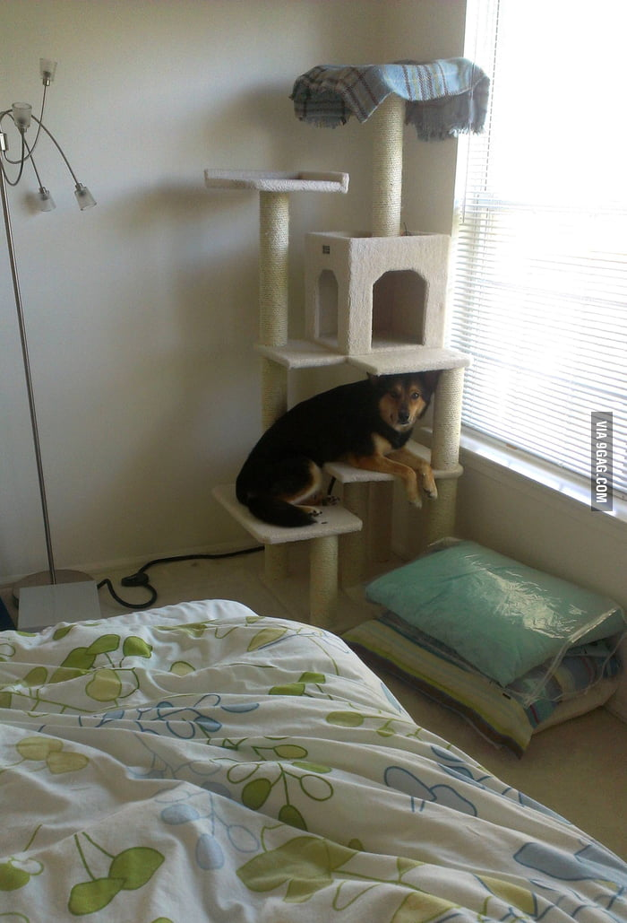 He thought he's a cat