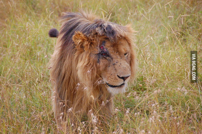Scar in real life!