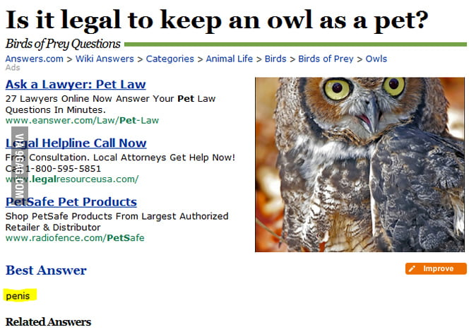 Is it legal to keep an owl as a pet?