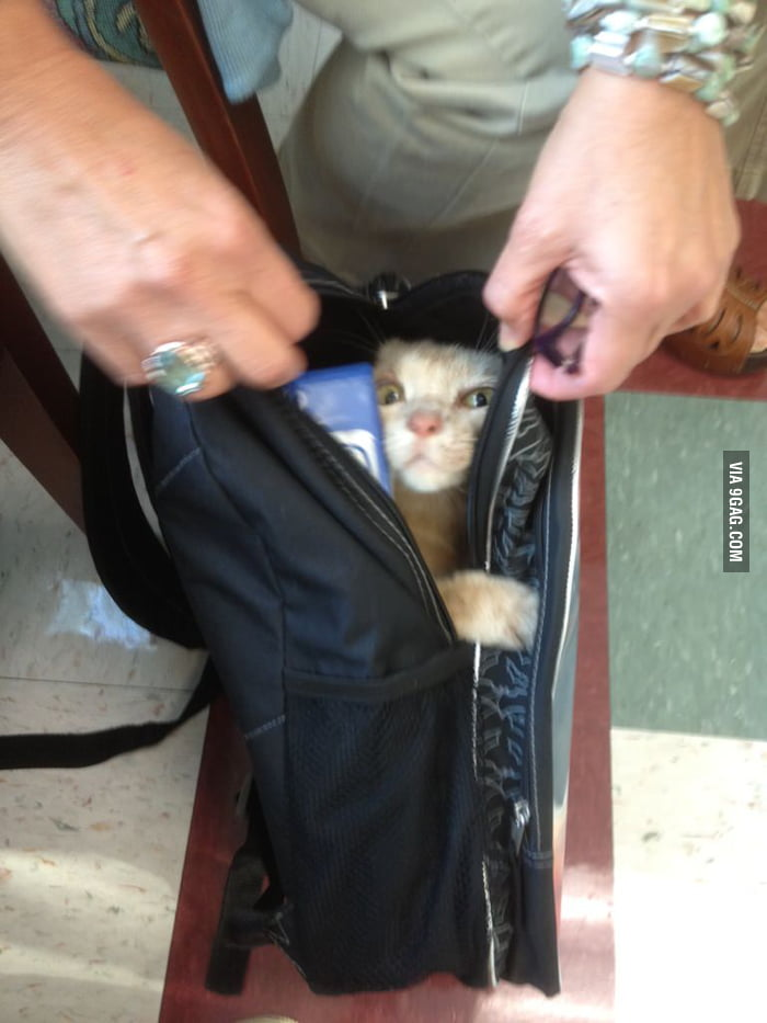 My friend brought his cat to school.