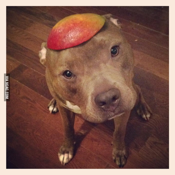 Do you like my mango hat?