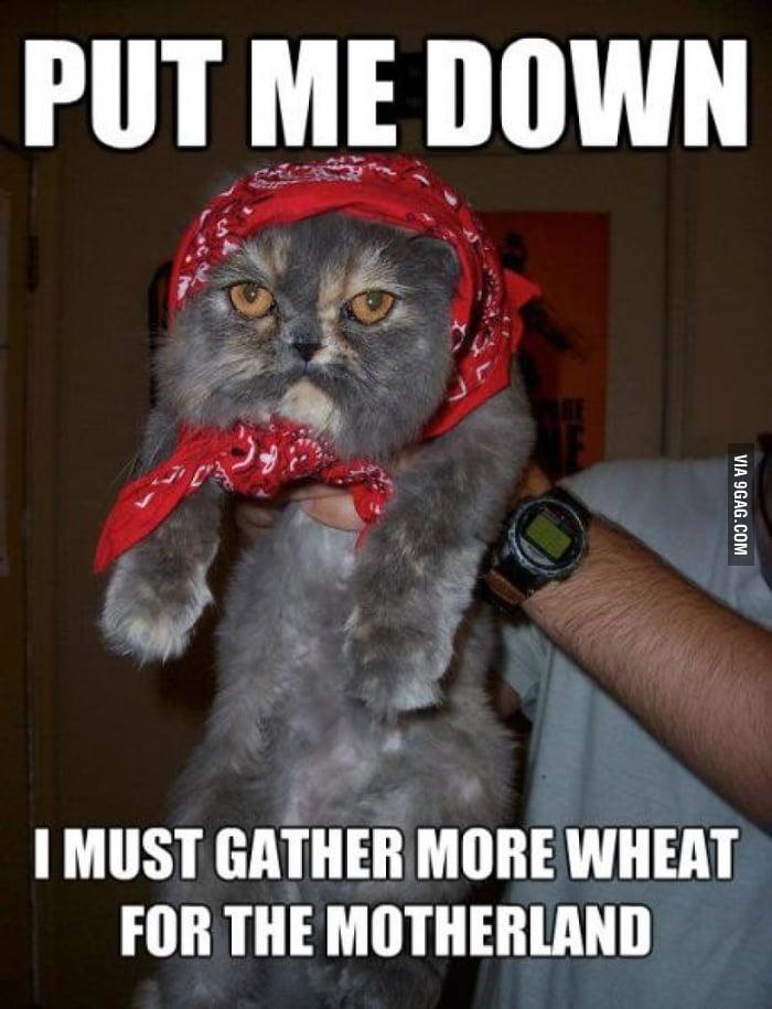 Communist Cat