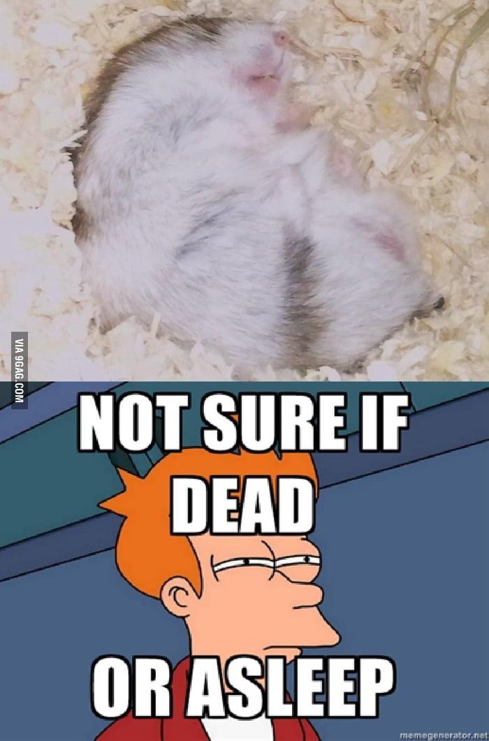 Schroedingers Hamster - 9GAG