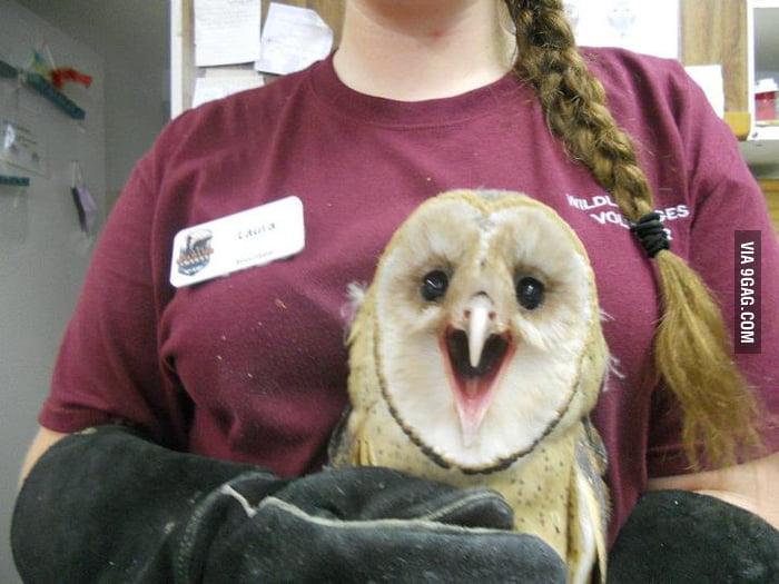 Happy owl is happy!