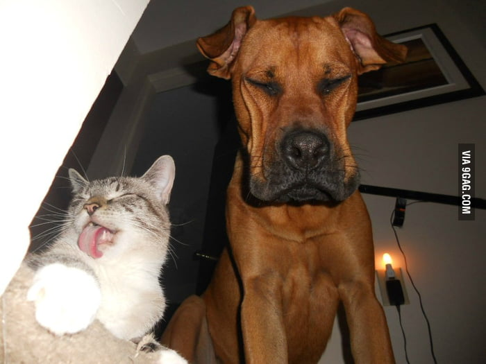 Cat and Dog making faces for a photo.