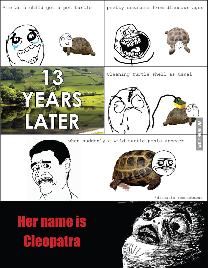 Tale about one turtle