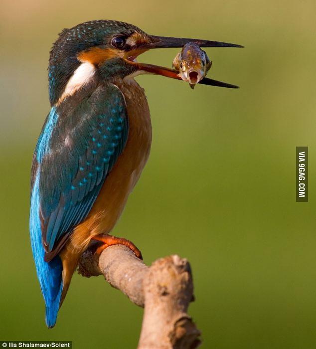 Terrified fish's last photo.
