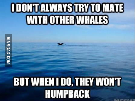 Whale Problems