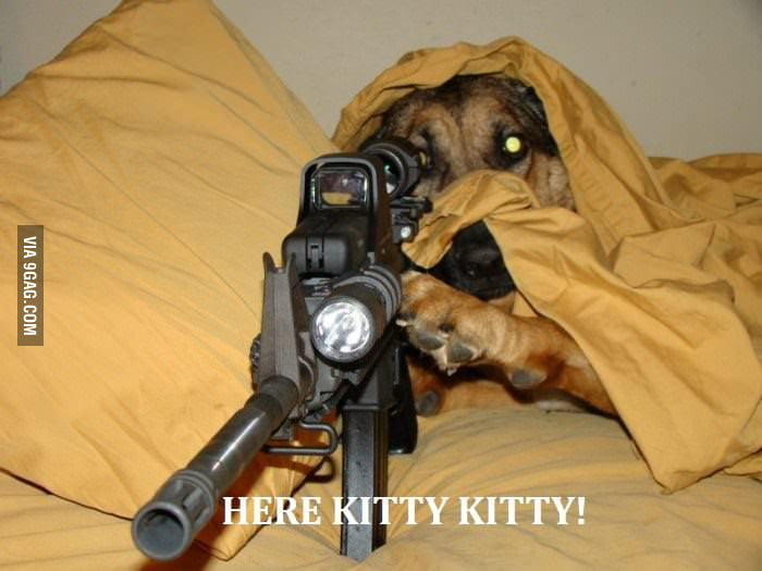 Here little kitty