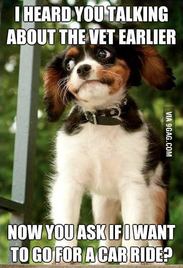 Suspicious Dog