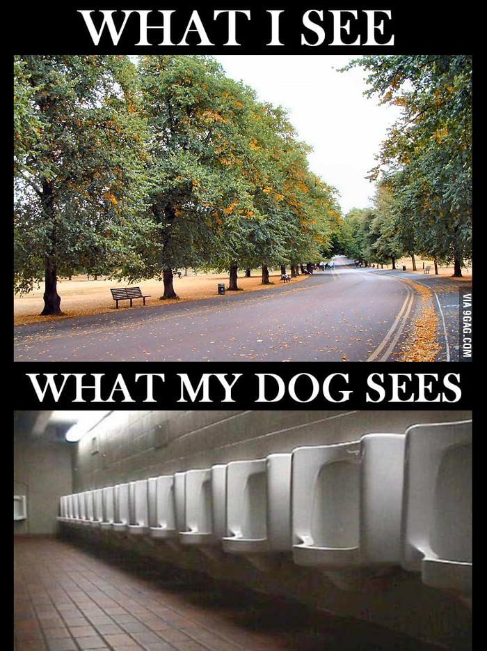 When I walk my dog
