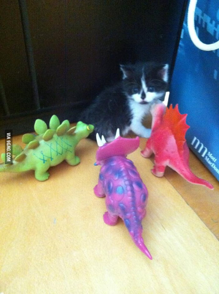 A kitten is being bullied!
