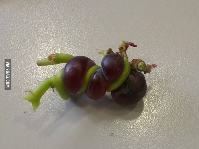 The most weird grapes I have ever seen.