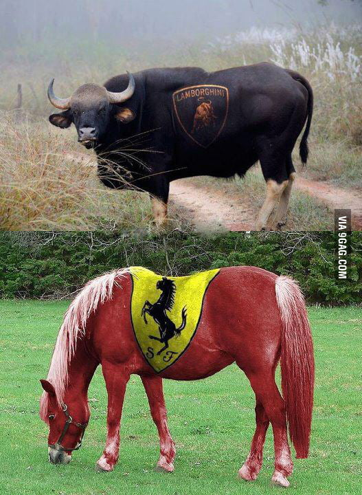 What would you choose - a bull or a horse?