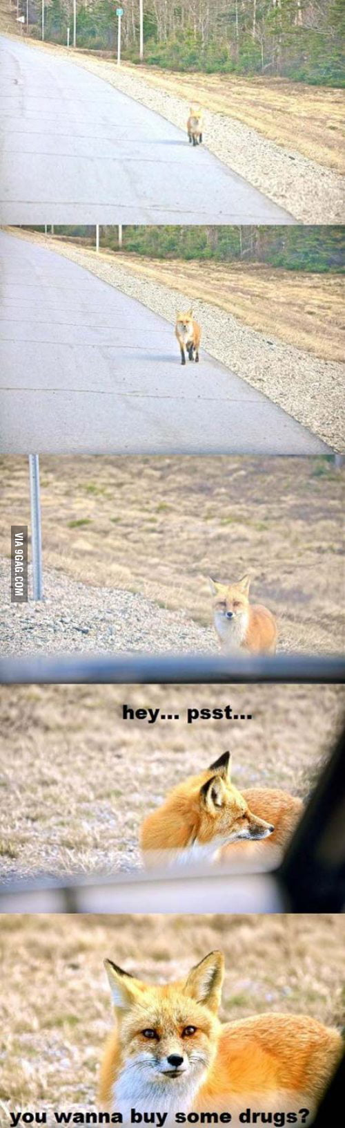 Hey...psst
