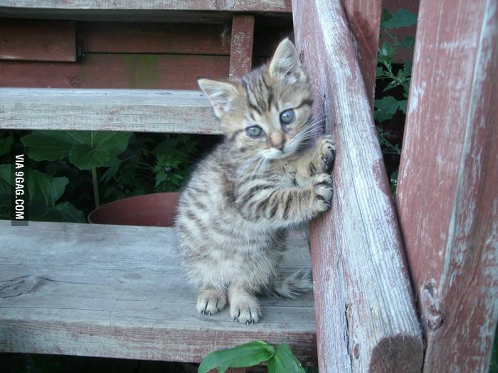 Kitten posing for the camera.