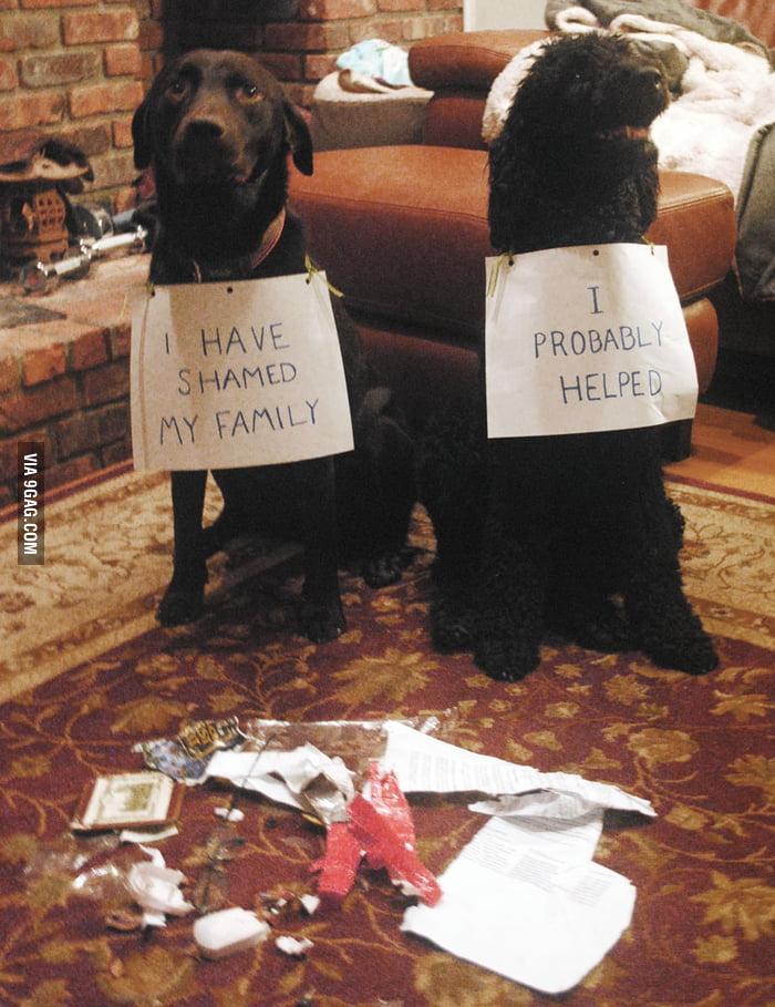I have shamed my family.