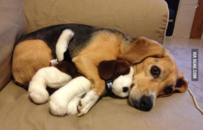 He loves hugging his buddy.