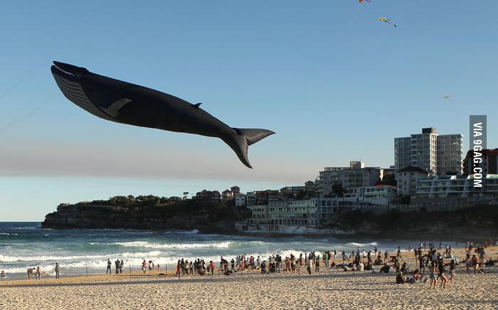Giant Blue Whale Kite!