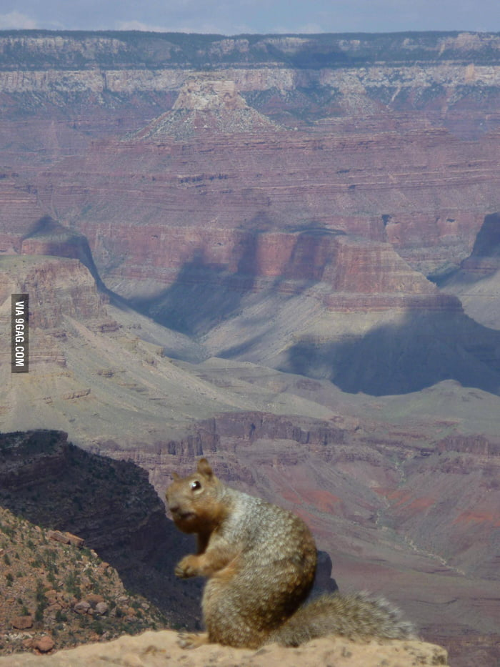 So I took this picture of a squirrel at The Grand Canyon