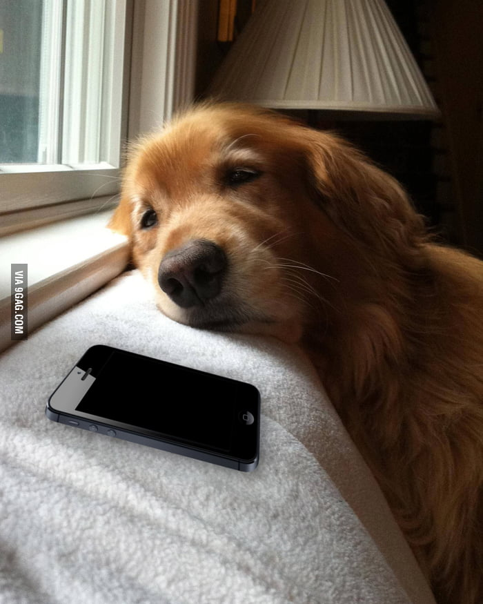 Me when waiting for a reply from my crush