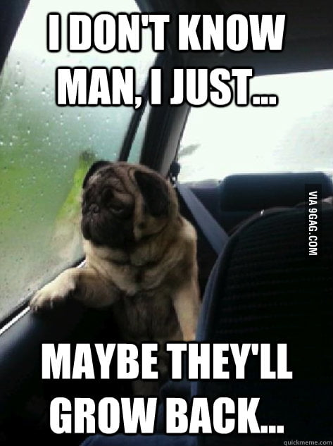 Introspective Pug on his balls