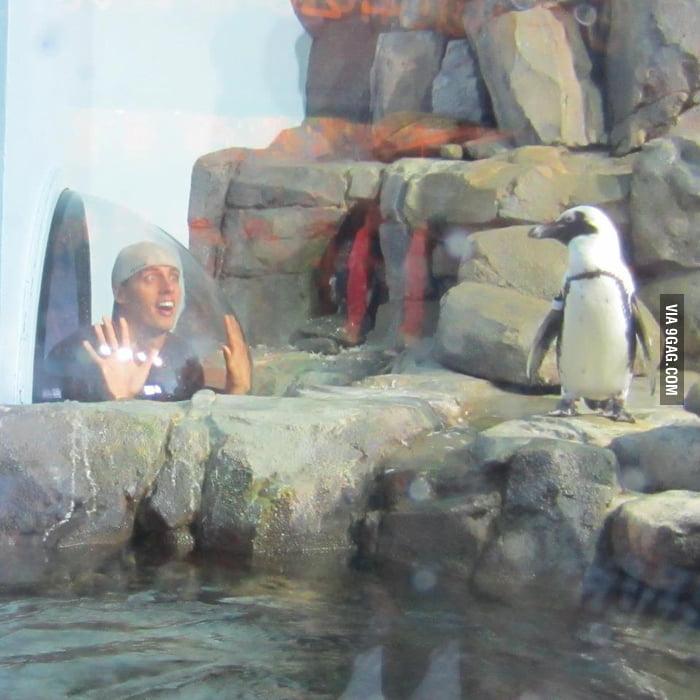 He loves penguins