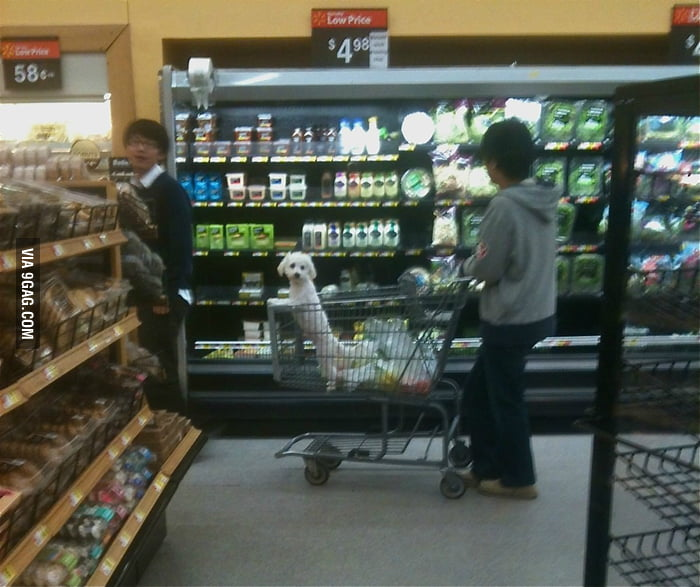 Am I racist for being concerned when I see a dog in trolley?