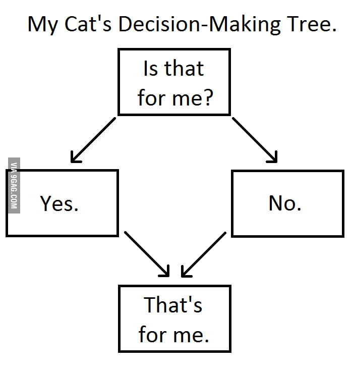 My cat's decision-making tree.