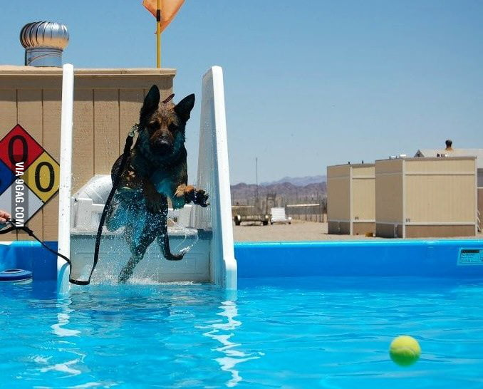 Baffy the bomb dog goes to the pool!