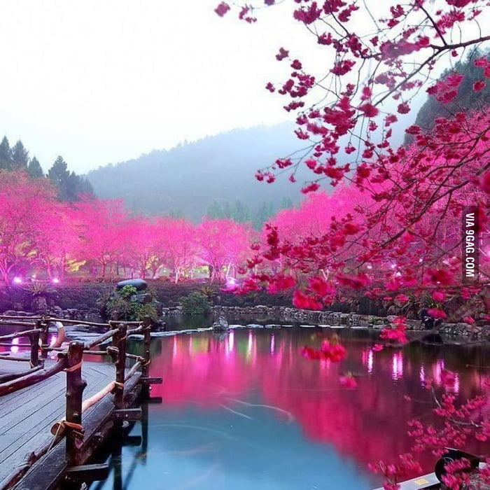 No photoshop is needed: Cherry Blossom Lake - Sakura, Japan
