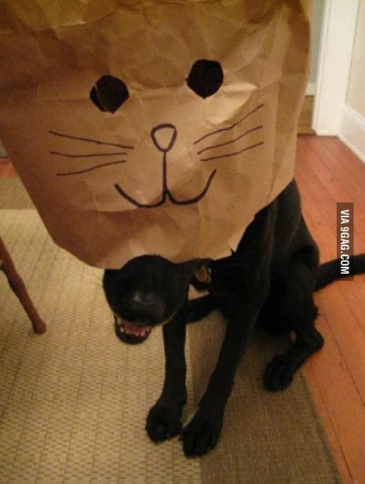 So I heard the internet likes cats.