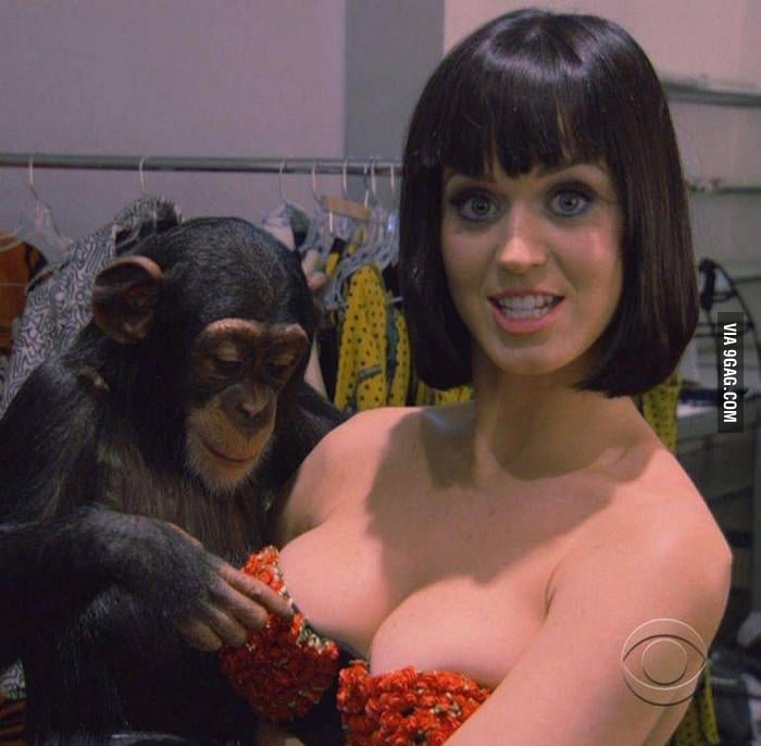 I'd do the same thing to Katy Perry like this chimpanzee.