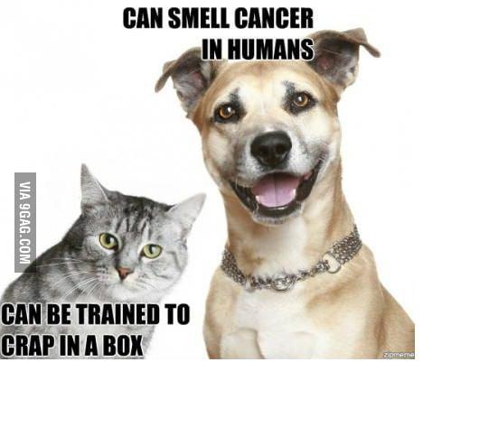 Cat Super Ability