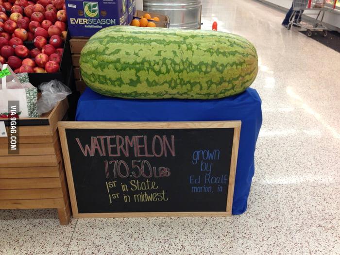170lbs watermelon