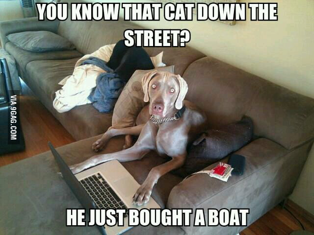 You know that cat down the street?