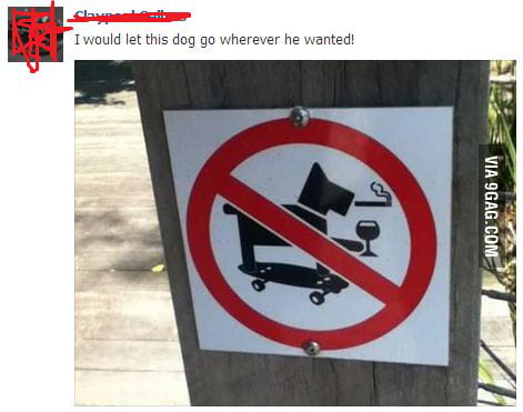 I would let this dog go wherever he wanted!