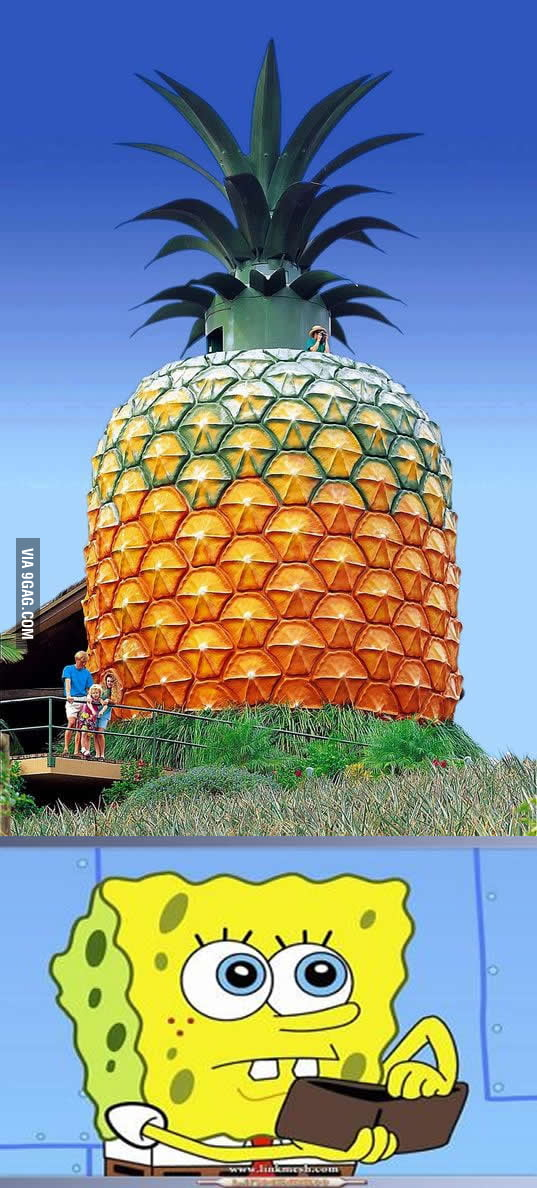 The world's biggest pineapple
