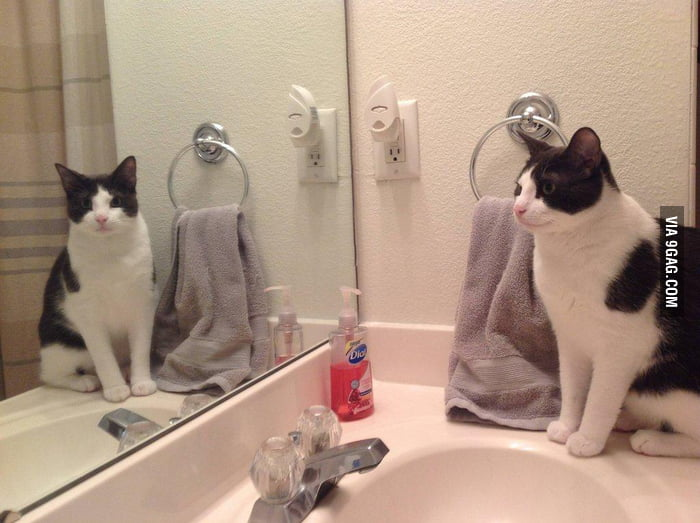 My cat always stares at me through the mirror like this.