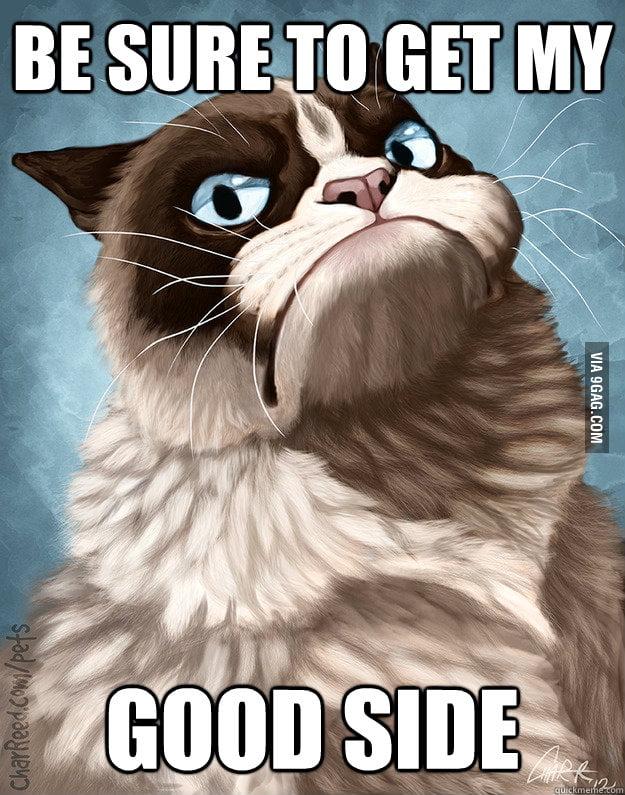 Grumpy Cat poses for a portrait