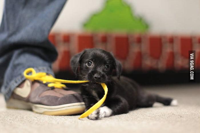 I can haz shoelace?