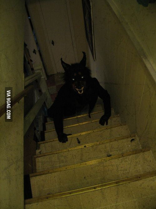 What Would You Do When You See This Coming Up Your Stairs