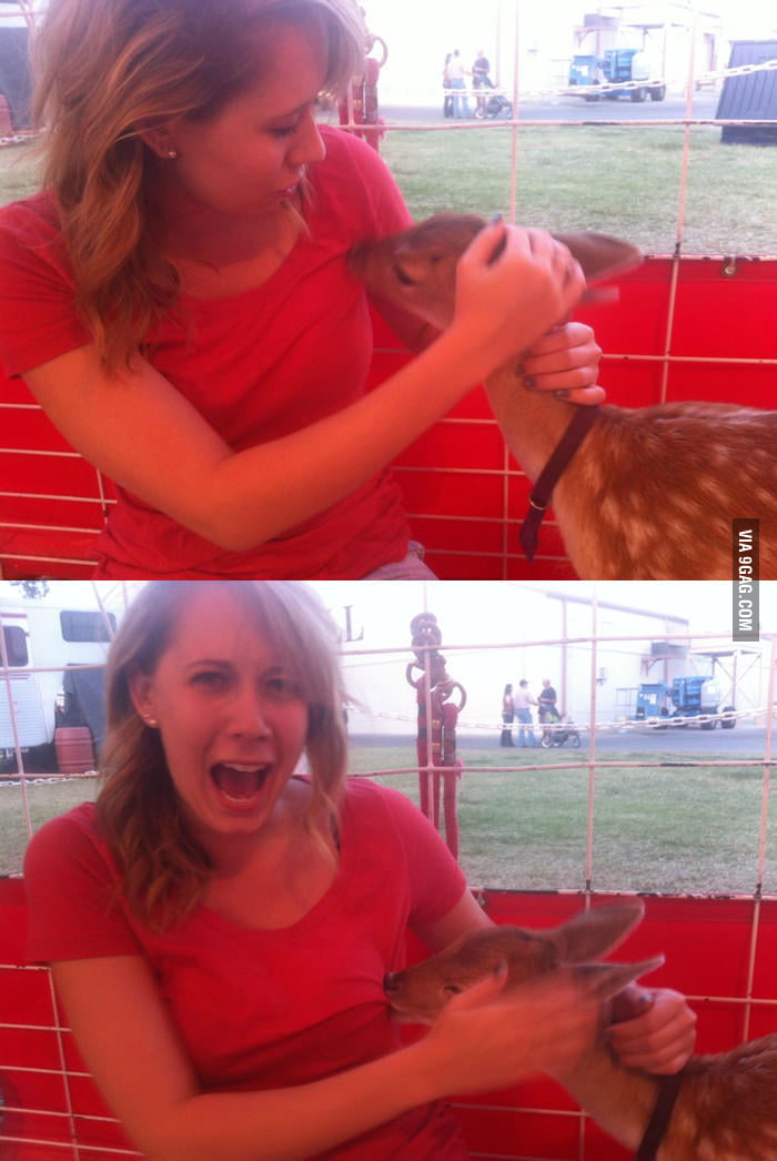 I think the baby deer wants some milk.