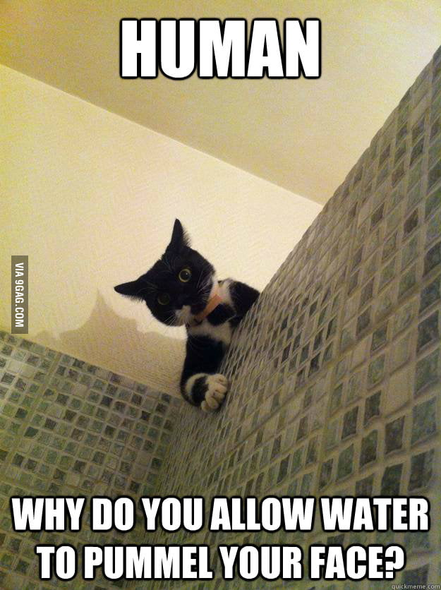 Cats must find it ridiculous that we take bath.